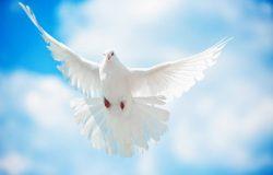 Световен ден на мира